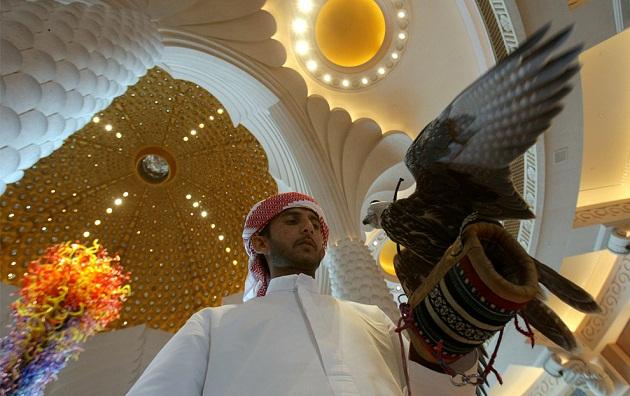 Сокол балобан национальный символ ОАЭ