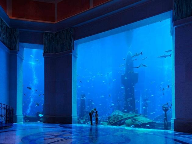 Крупнейший из аквариумов комплекса Shark Lagoon населен акулами и скатами, высотой почти 6 метров