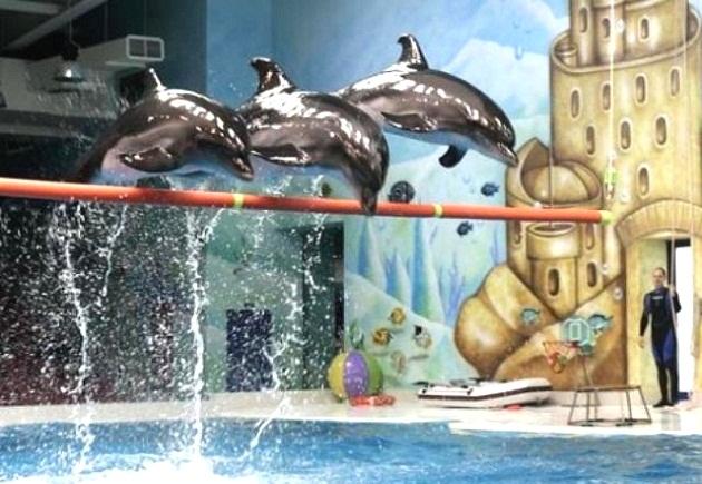 Dubai Dolphinarium здесь вы можете насладиться шоу с участием дельфинов