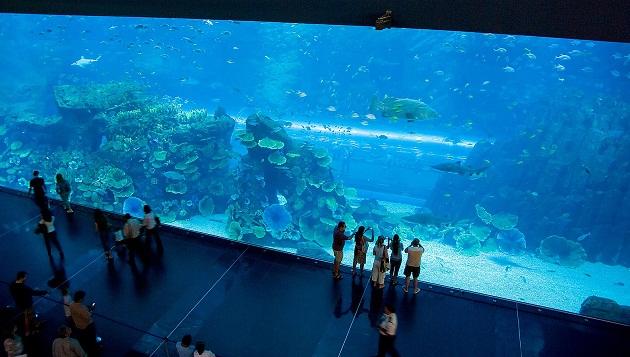 Аквариум в The Dubai Mall имеет самую большую в мире панель для просмотра