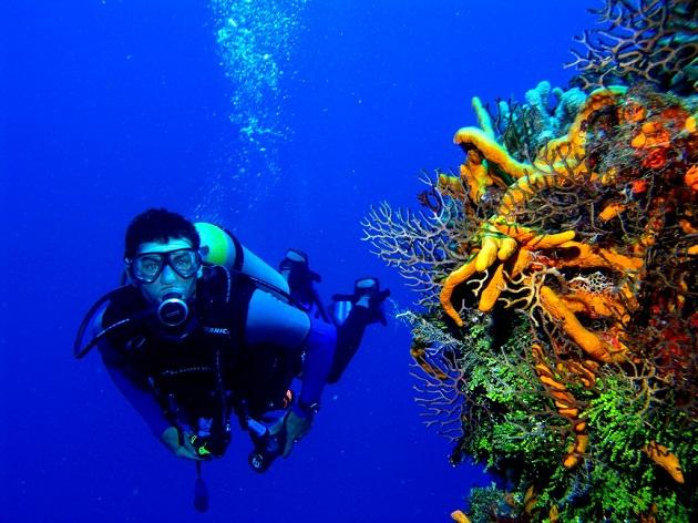 В подводных просторах ОАЭ. Это нужно видеть своими глазами